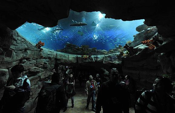 香港海洋公園水族館
