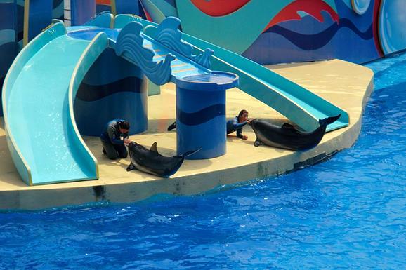 香港海洋公園海豚表演