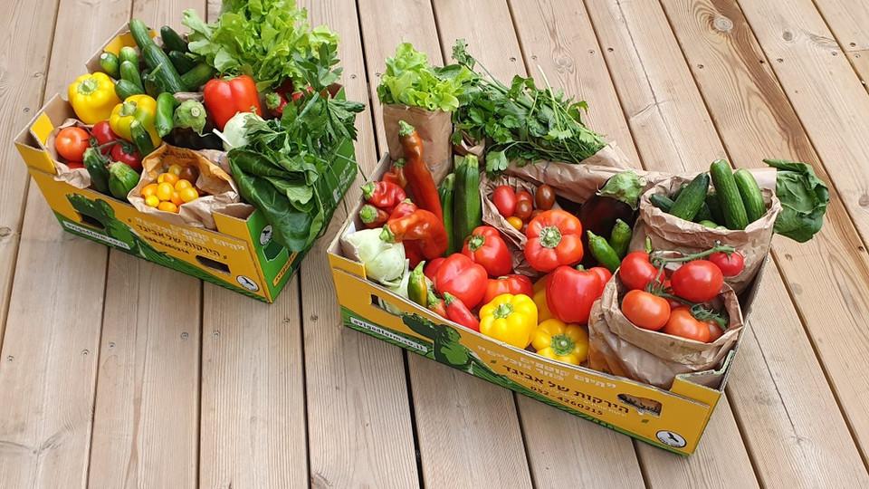 ארגזי ירקות.jpg