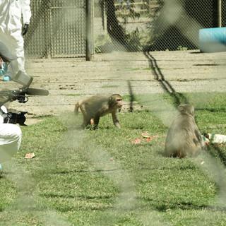 Dan Levin in a Primate Research Center