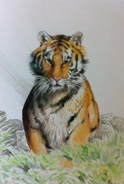watercolour tiger