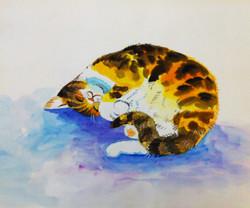 watercolour cat