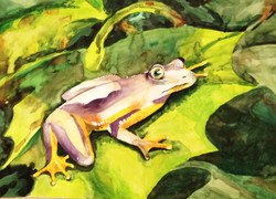 watercolour frog