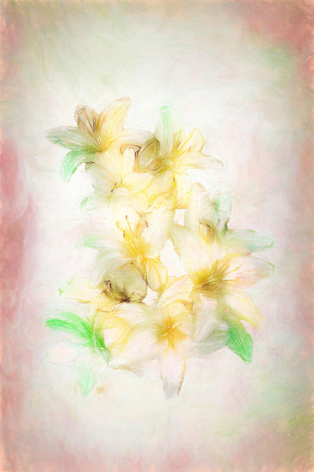 Daylilies Toned
