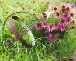 Rambling Garden Rudbeckia Impasto