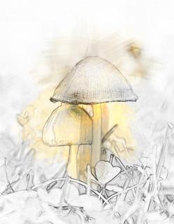 Mushroom Friends Up Close and Personal Yellow Splash