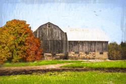 Barn with Orange Tree