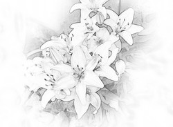 Daylilies 1
