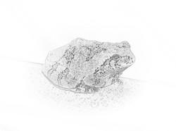 Tree Toad