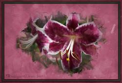 Watercolour Lily Sketch