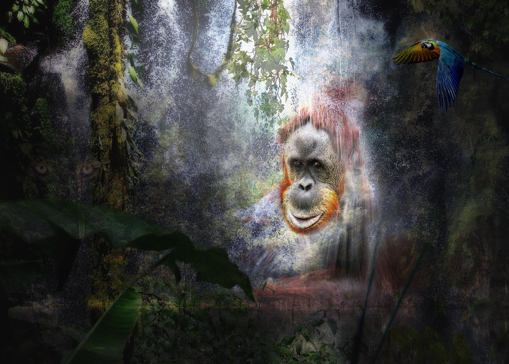 I Am the Rainforest