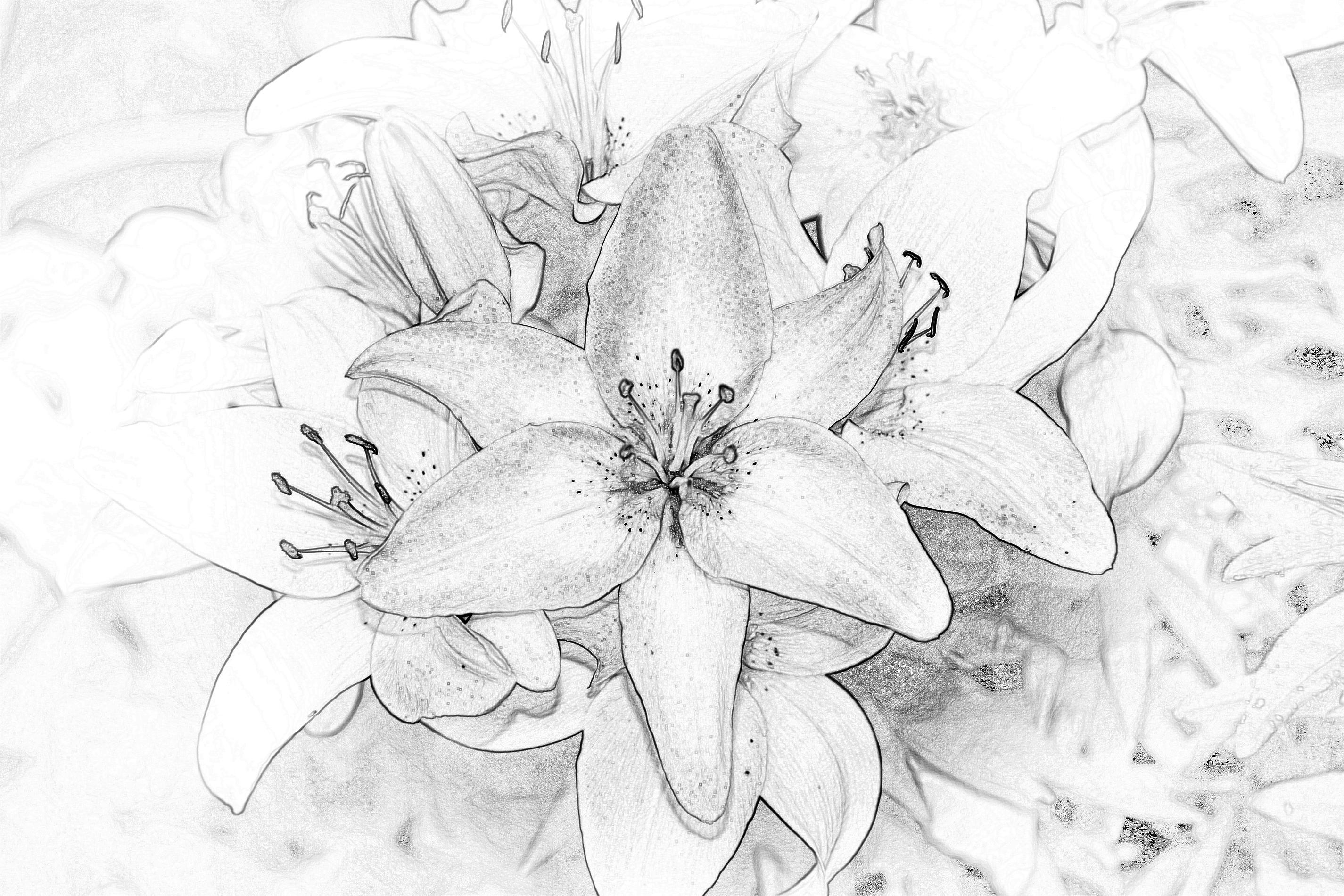 Daylilies 2