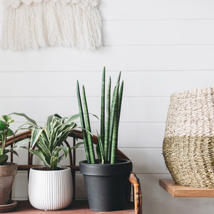 Plant styling.