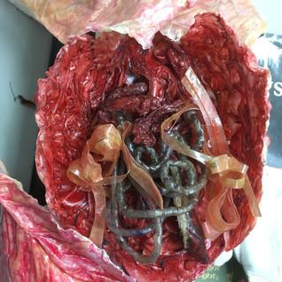 Rabbit guts
