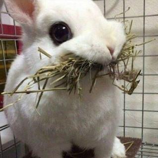 Rabbit Refrence