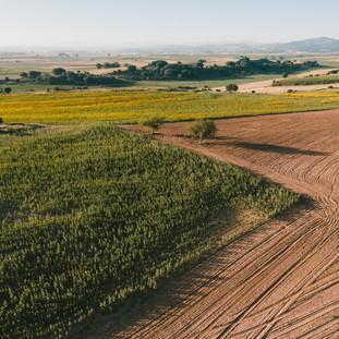 Over The Fields No2. La Bureba. Burgos. Copyright © JZeppelina