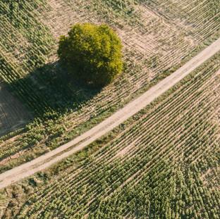 Of The Trees And The Roads. La Bureba. Burgos. Copyright © JZeppelina