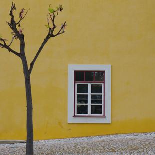Urban Nature Paints. Tavira, Algarve. Copyright © JZeppelina