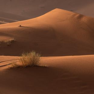Desert Waves 2