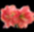 Fleuriste sallanches