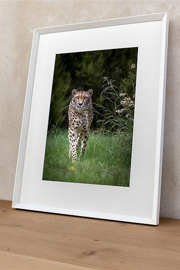 'cheetah 3'
