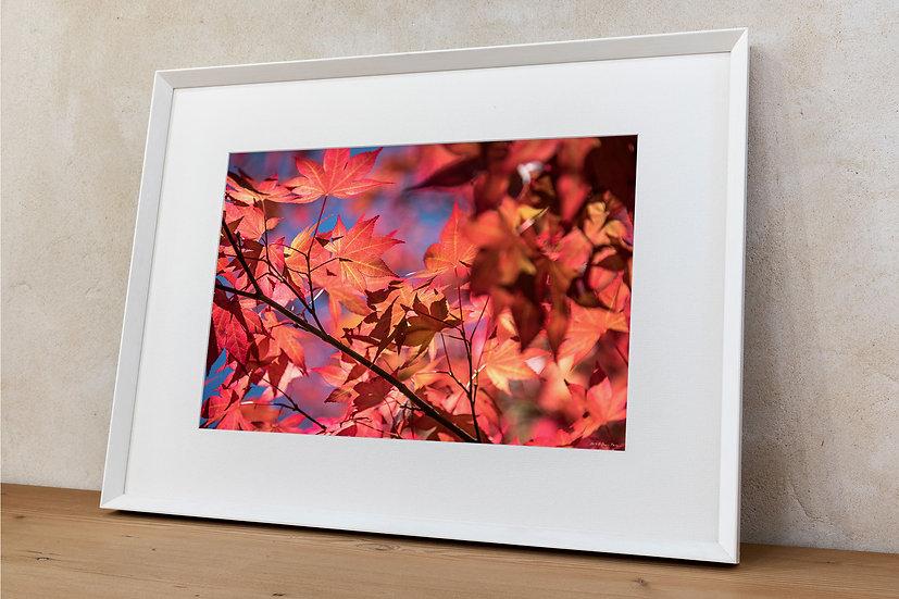 'foglie 1' Dani's Photos
