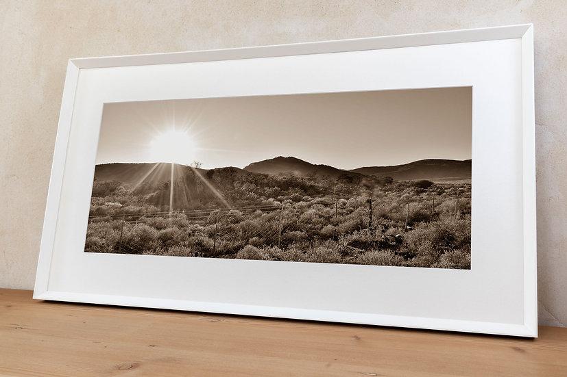 'morning sun 8'