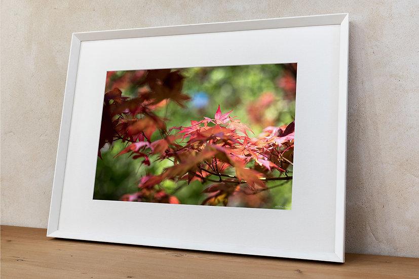 'foglie'