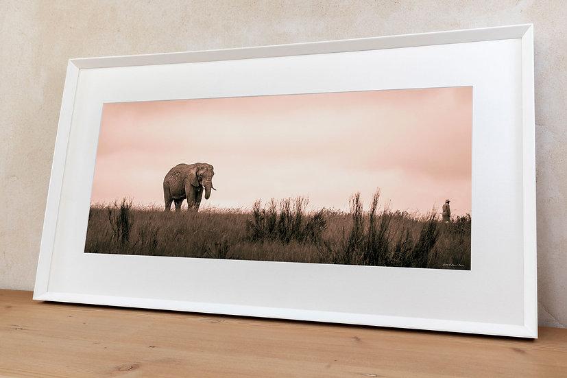 'African bush elephant 2'