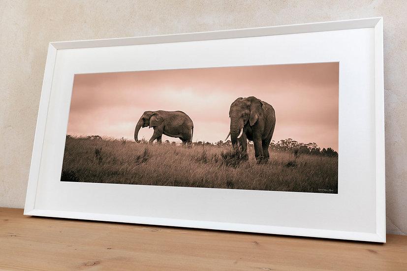 'African bush elephant 3'