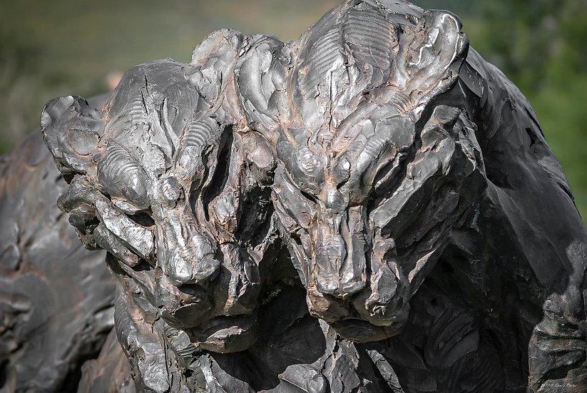 'Dylan Lewis Sculpture Garden 14'