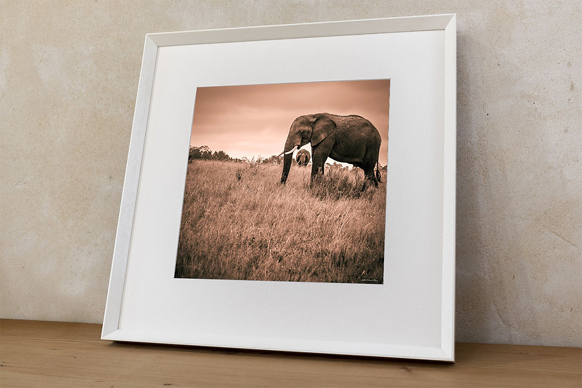 'African bush elephant 10'