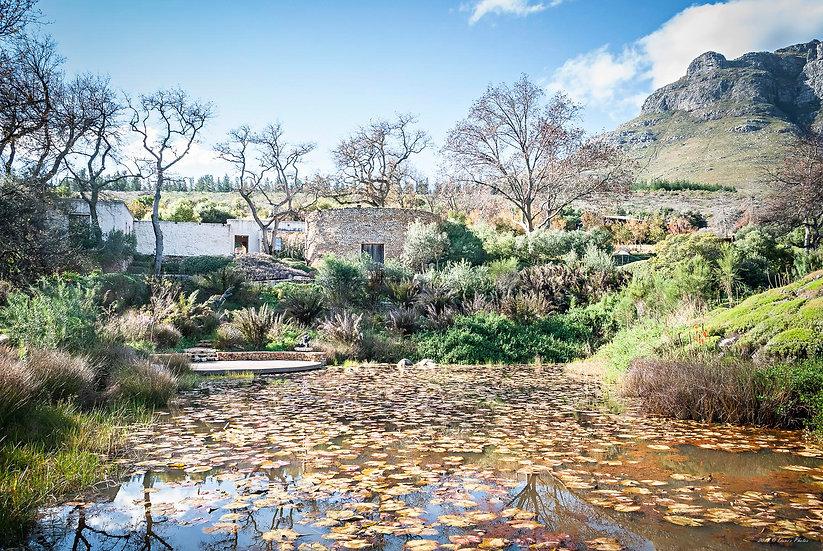 'Dylan Lewis Sculpture Garden 19'