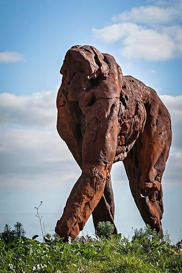 'Dylan Lewis Sculpture Garden 5'