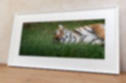 'Tiger'_D7N7430-Edit.jpg