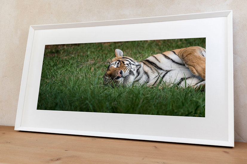 'Tiger'