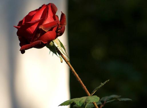 14 – 17 February 2020 | Valentine Special at Temenos