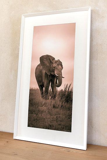 'African bush elephant 4'