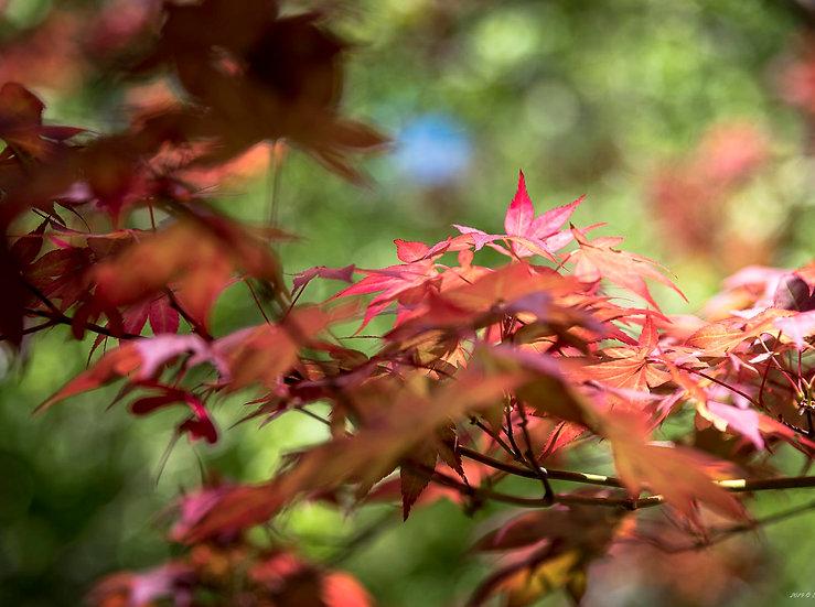foglie 1