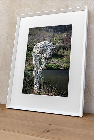 'Dylan Lewis Sculpture Garden 23'