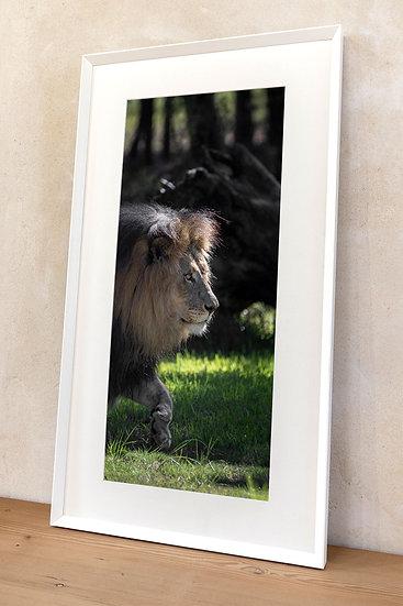 'Lion'
