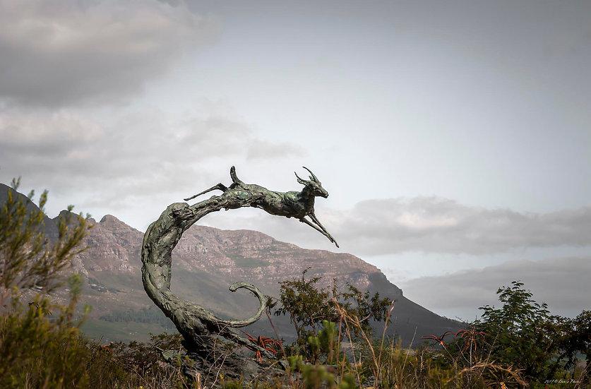 'Dylan Lewis Sculpture Garden 17'