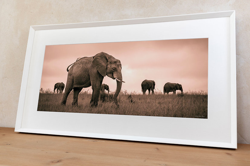 'African bush elephant'