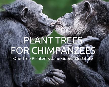 planttreesforchimpanzees_2000x.png