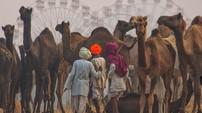 Pranab Ghosh (India) - PUSHKAR FAIR 2.jp