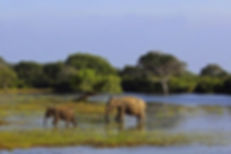 Lahugala National Park.jpg