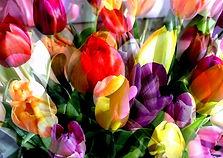 Tulpen Gemäde Collage