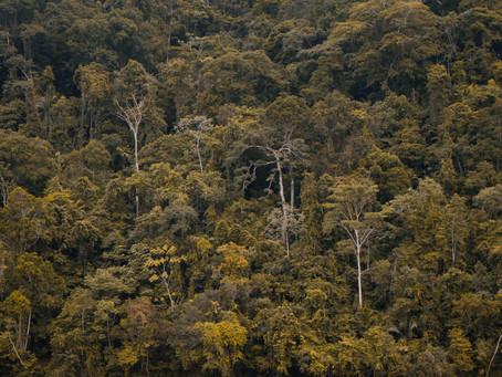 weLOG #12: 18,000 trees