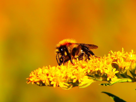 Forests as bee sanctuaries