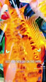 Day on the farm.mp4